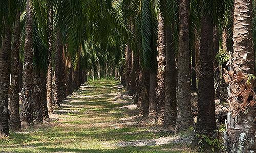 Productores de plantas ornamentales o rboles frutales en for Todas las plantas son ornamentales